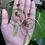 Thumbnail: Here Comes the sun earrings