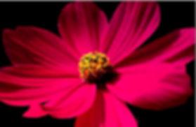 fleur_plaquette_retouchée.jpg