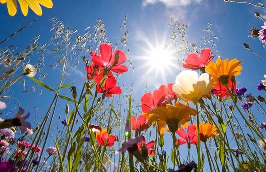fleurs-de-bach-les-fleurs-du-bien.jpeg