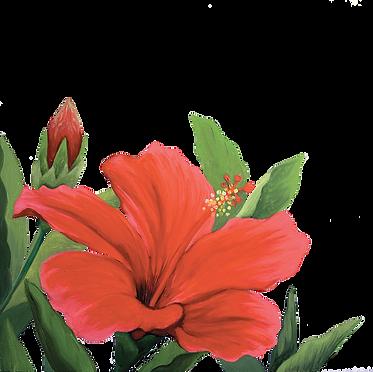 hibiscusweb.png