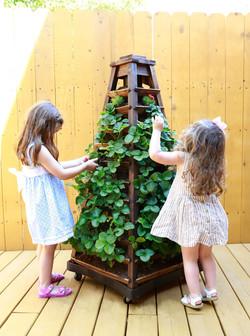 Kids Love Eye-Level Gardening