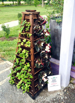 U. of Tennessee Kitchen Garden