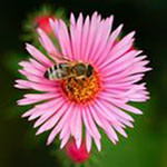 Help Save The Bees with Your Vertical Garden