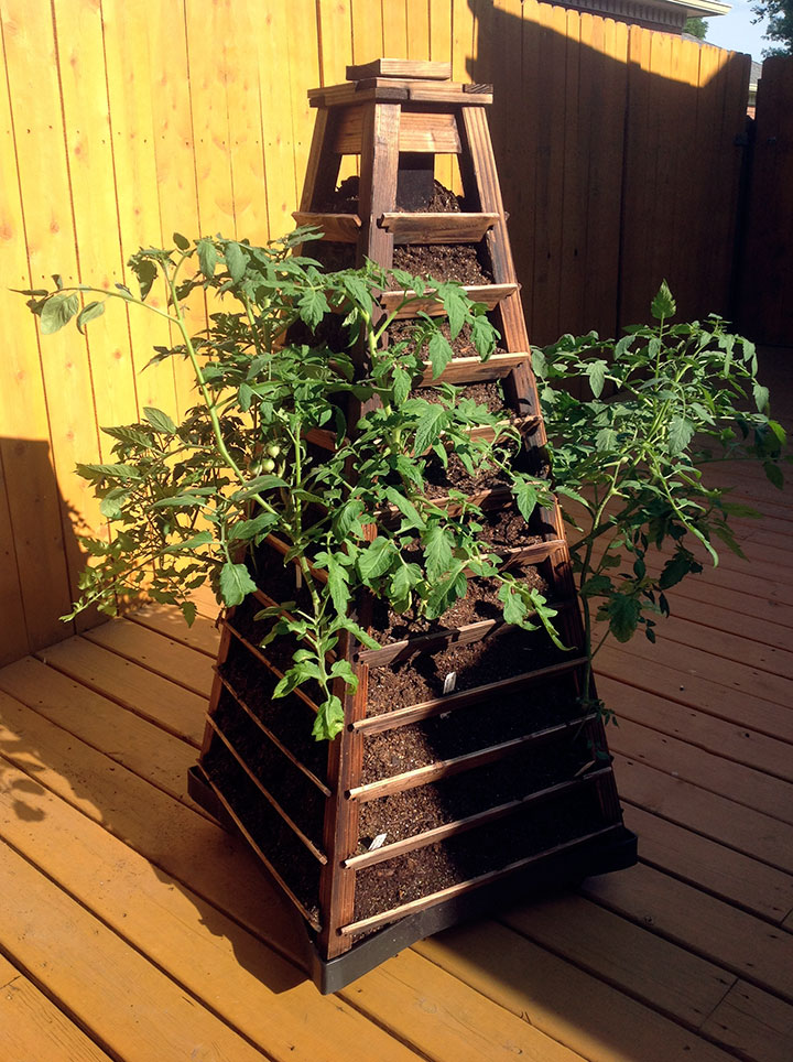 Tomato Tower - Early Season