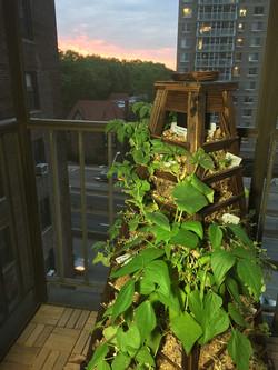Newyork_balcony