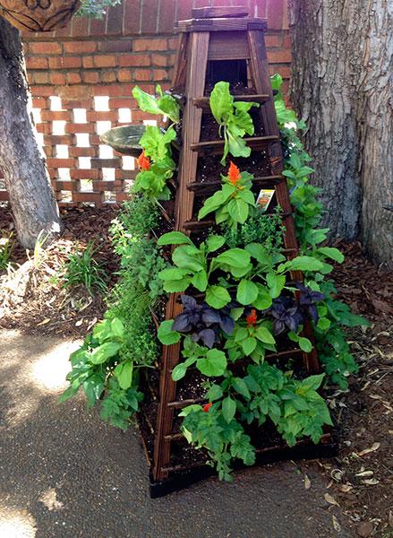Herbs, UT Flowers and Veggies
