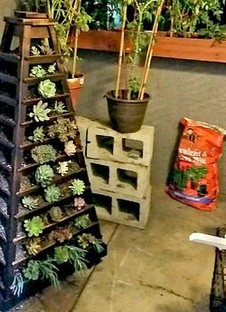 earthtower_succulents