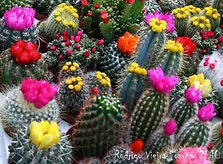 Earth Tower Cacti