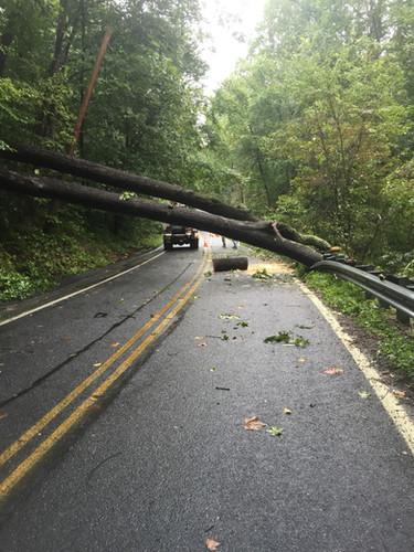 tree down across Crusher Road