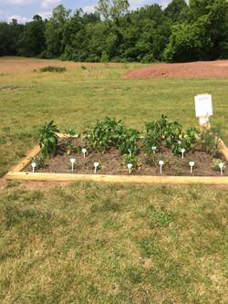 Community Garden @Union Meadows East