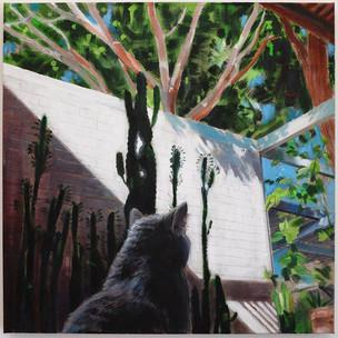 Cat in a Patio | 2019