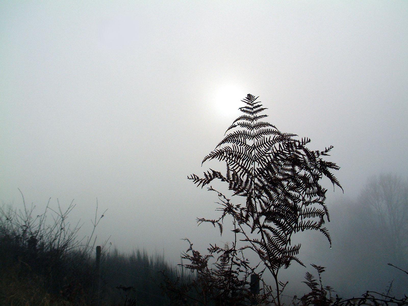 Farn im Nebel