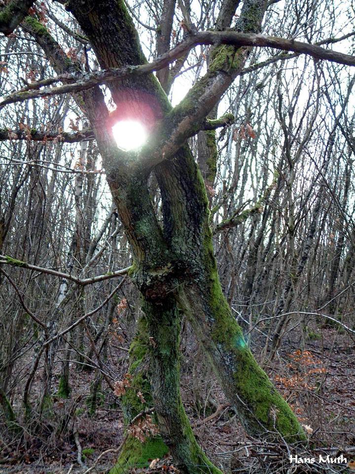 Baum Baeumin 01
