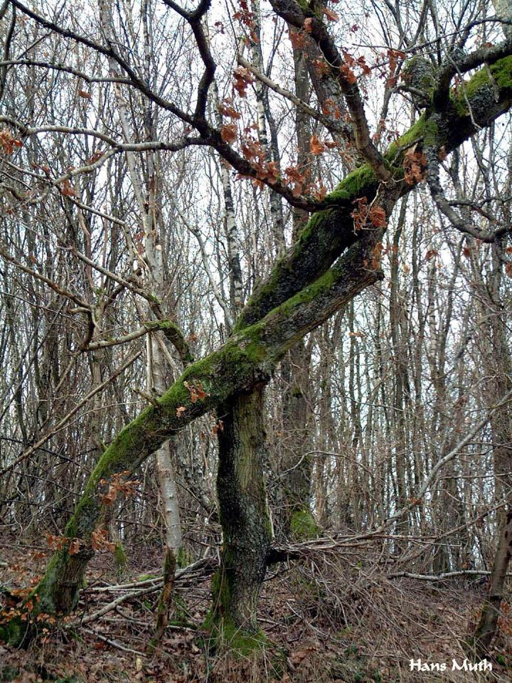 Baum Baeumin 02