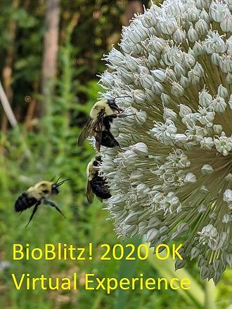 2020 OK BioBlitz.jpg