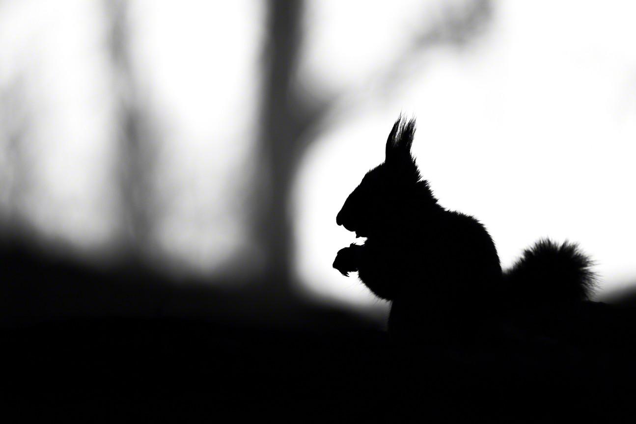Little Silhouette