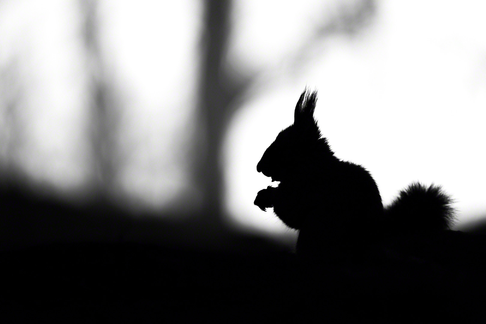 Little Silhouette