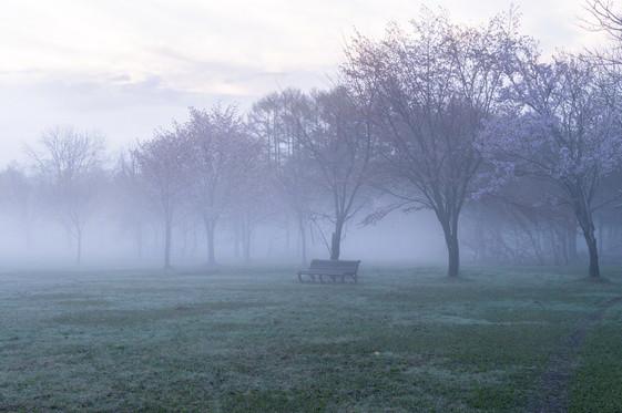 Dawn Park