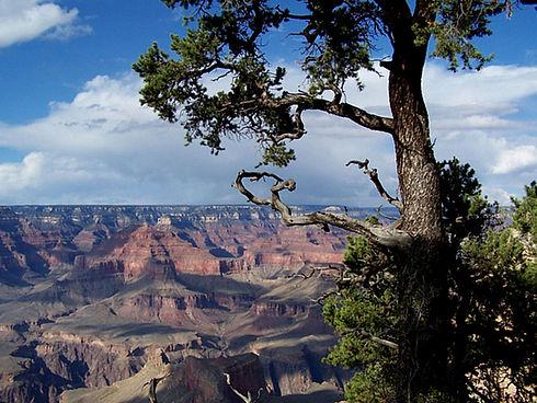 tree-on-the-rim.jpg