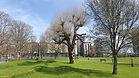 Meath Gardens photo.jpg