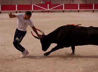 bull2.jpg