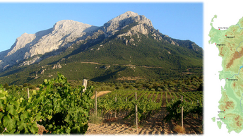 Sardegna, Azienda Agricola Puddu