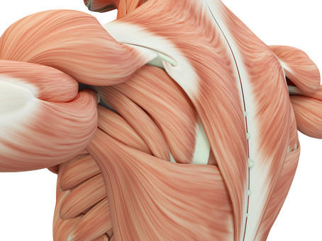 What is Muscle Hypertrophy?
