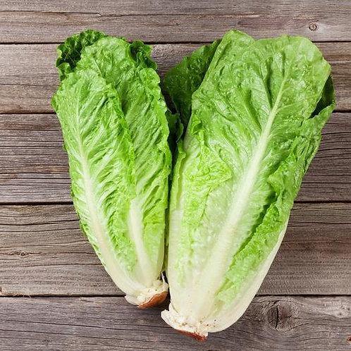 Cos Lettuce (Green)