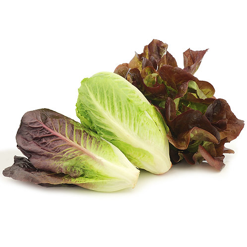 Cos Lettuce (Red or Green)