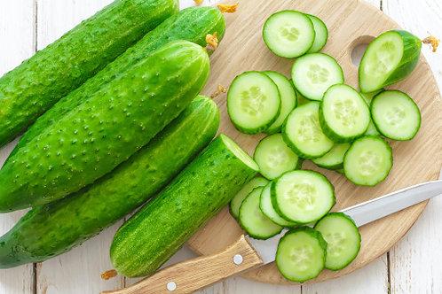 Mediterranean Cucumber (Small)