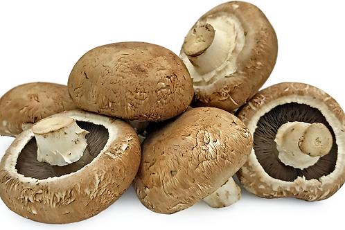 Portabellini Mushroom