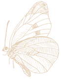schmetterling-09_edited.png
