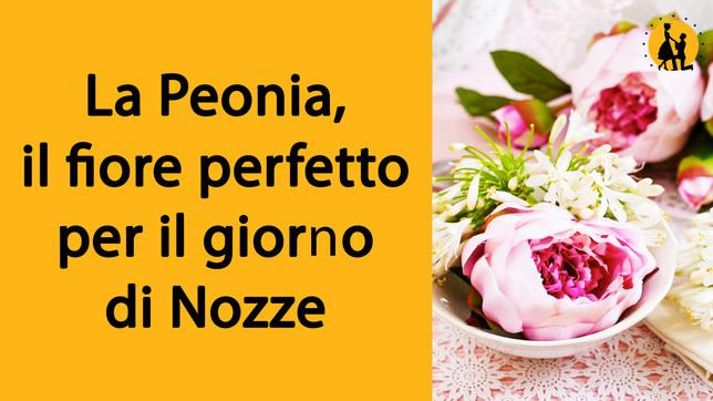La Peonia, il fiore perfetto per il giorno di Nozze