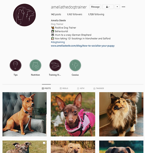 Buzzy Graphics a freelance graphic designer and illustrator in manchester and Lancashire available for hire remotely for brand identity and social media support for dog trainers and pet related business'