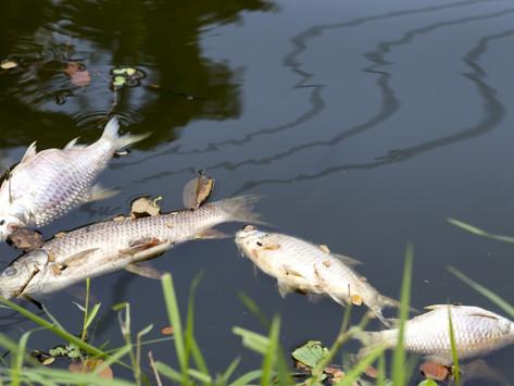 大數據預測河川死魚?環保署導入AI水質感測器,即時抓偷排廢水