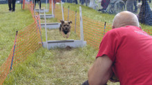 Businesses sought for dog friendly family festival