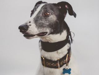 In leaps and hounds – helping greyhounds to be great with Susan McKeon