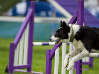 Whats on at this years North East Dog Festival