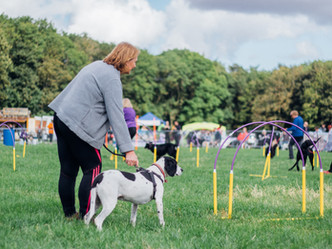 Festival proves to be barking mad success!