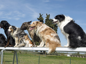 Go barking mad for a fantastic lineup of speakers at The North East Dog Festival.