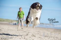Dog photoshoots at Druridge Bay