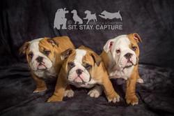 dog photography studio morpeth