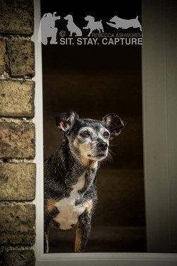 On-location dog photography