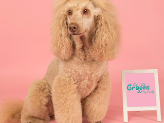 Grooms By Emily joins The North East Dog Festival as Street Paws Dog Show Sponsor.