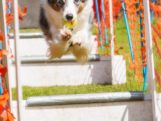 Fast - Fun and Loud - it can only be Flyball!