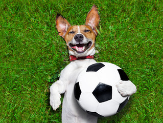 Can your dog bend it like Beckham?