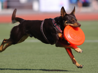Join the steeplechase to raise money for the GSP Rescue
