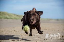 Rebecca Ashworth Dog Photography
