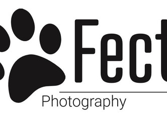 Pawfection Photography joins The North East Dog Festival