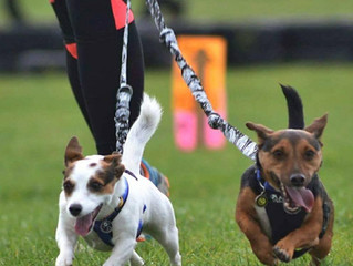 Local Canicross group joins The North East Dog Festival Lineup